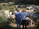 Fotografía de la noticia: Los primeros embutidos de cordero 'halaf' ecológico se venderán en Madrid
