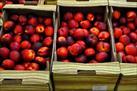 Fotografía de la noticia: Primeras quejas por la escasez de fondos de la UE destinados a la retirada de la fruta
