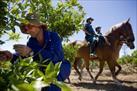 Fotografía de la noticia: Agentes a caballo refuerzan la vigilancia de zonas agrarias de Cartagena