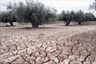 Fotografía de la noticia: Proponen a Montoro la necesidad de aplicar una rebaja fiscal en la agricultura valenciana