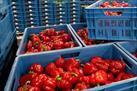 Fotografía de la noticia: La CE determina cuánto pagará a cada producto afectado por el veto en las nuevas ayudas