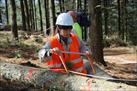 Fotografía de la noticia: NEIKER lleva a cabo el derribo de pinos para poder analizar su resistencia al viento