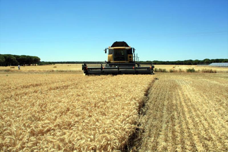 Cereales, canal agricultura - todas las noticias, legislación, e ...