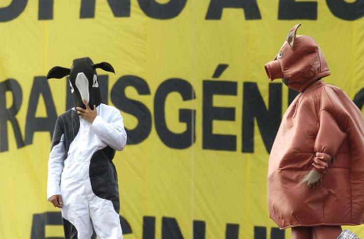 Polémica transgénicos: Más de 100 premios Nobel critican a Greenpeace por rechazarlos