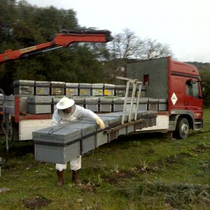 apicultura trashumante 2