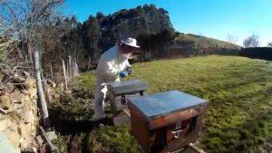 apicultura trashumante