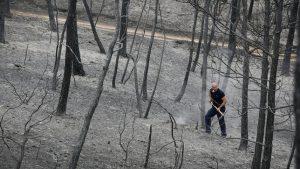bosques aclarado incendio