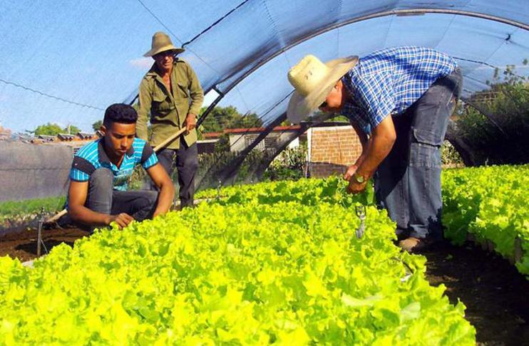 Cuba obtiene por primera vez semillas de zanahoria autóctonas