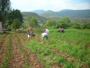 UNION DE UNIONES AGRICULTOR ACTIVO PAC 5