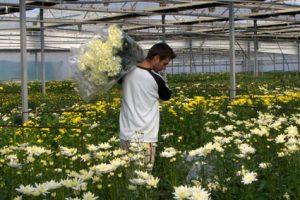 FLORES PLANTA VIVA EXPORTACION FEPEX 3