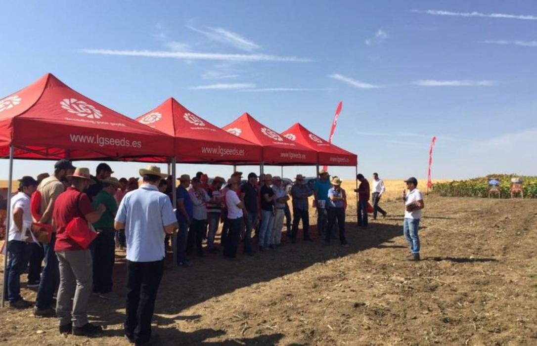 400 agricultores asisten a la plataforma tecnológica de girasol de Semillas LG en Cuenca