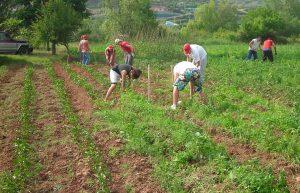 AGRICULTURA ECOLOGICA CLM PERDIDA 2