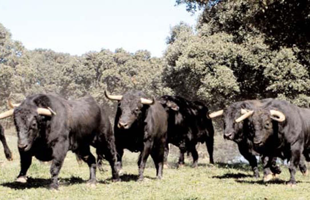 Día del Medio Ambiente: Los ganaderos de lidia reclaman «atención» a la ministra y recuerdan su papel en la biodiversidad