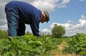 ENVEJECIMIENTO AGRICULTURA FENACORE 2