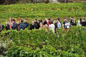 ruta do viño polo ribeiro viñobus ribadavia ouresne