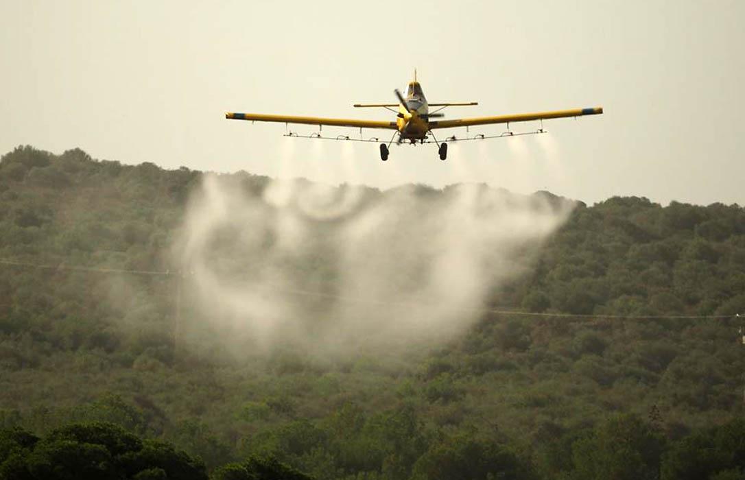 Murcia inicia los trabajos para combatir la procesionaria por medios aéreos en 2.500 hectáreas de pinar