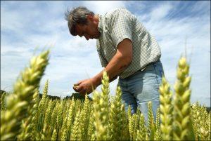 Bois-Seigneur-Isaac, 5 July 2002 The farm of Eddy Puissemier in the town of Bois-Seigneur-Isaac in Belgium. The farmer checks his wheat fields for diseases. Jan Van de Vel©EC-CE