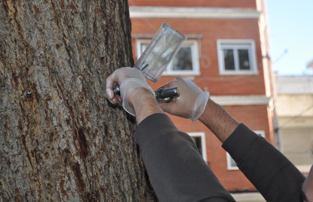 Una empresa valenciana aplica un tratamiento muy efectivo e inocuo para los pinos con procesionaria