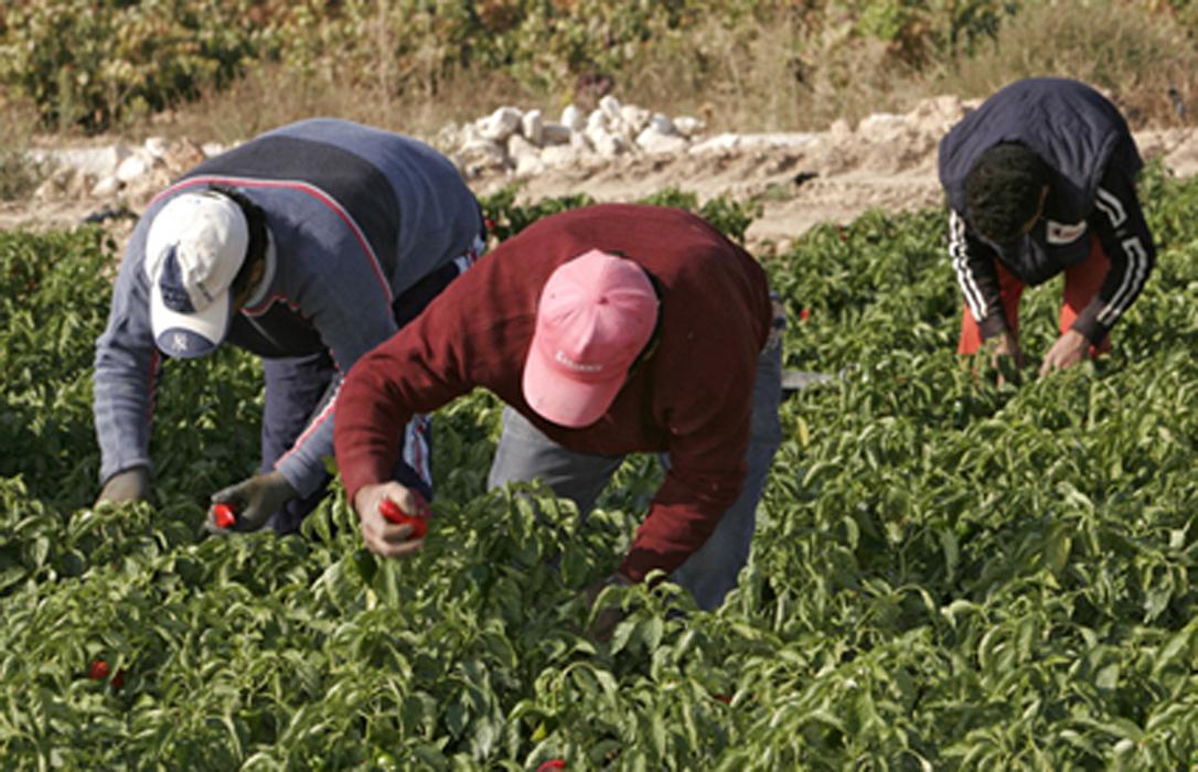 El paro agrícola sigue subiendo, con un 12% en octubre, mientras se denuncia la falta de mano de obra en el campo