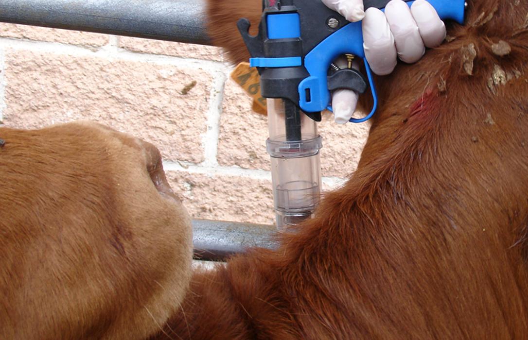Tras la muerte accidental de un veterinario, piden reforzar las condiciones de seguridad en los saneamientos ganaderos
