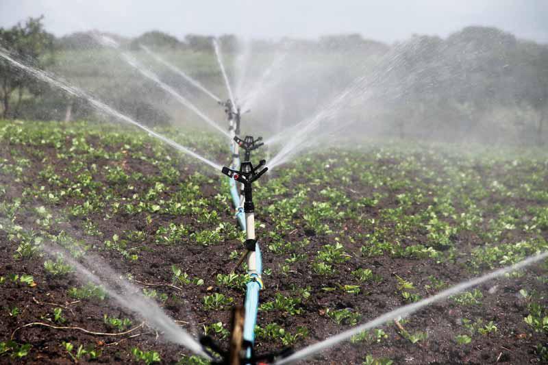 La App InfoRiego permitirá ahorrar un 35% de agua y energía a los regantes e incrementar la producción un 20%