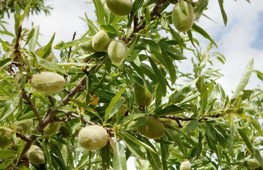 El seprona localiza almendros en viveros for Viveros zona norte