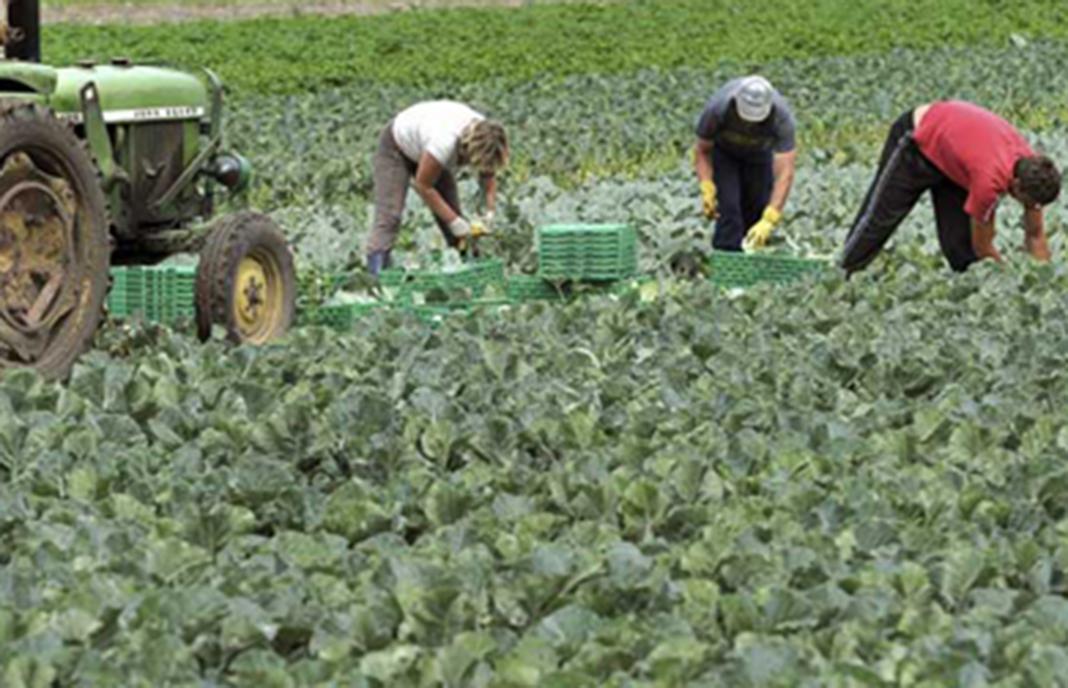 Decenas de empresarios agrícolas y trabajadores inmigrantes, detenidos por supuesto fraude en el cobro de subsidios