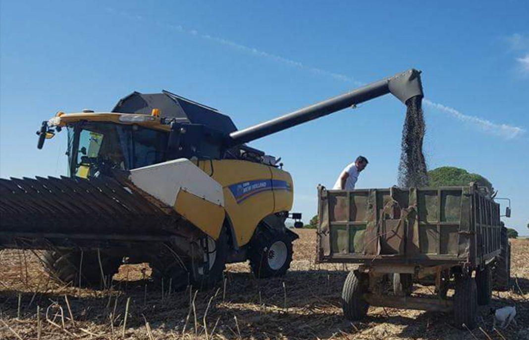 Los agricultores reivindican la importancia del girasol español frente al aceite de palma importado