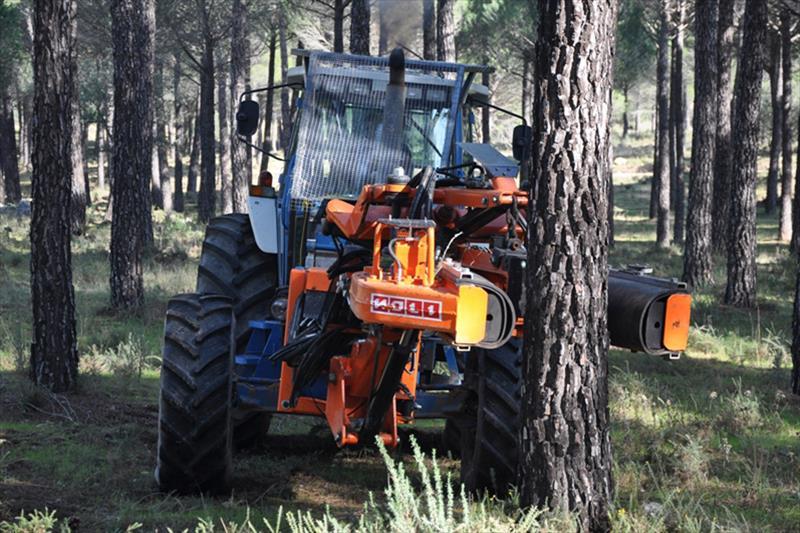 Dura respuesta: El sector teme el fracaso de la convocatoria de las ayudas forestales andaluzas