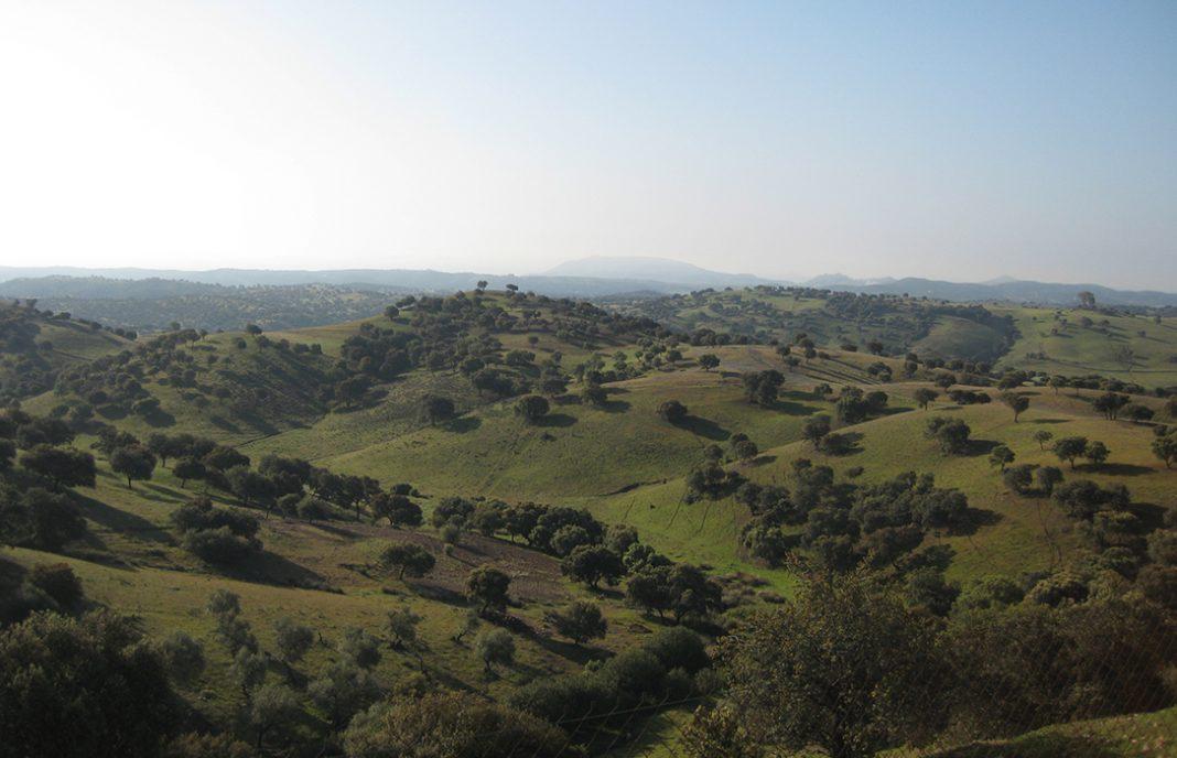 Asaja se reafirma en su oposición a la propuesta de Sierra Morena de Córdoba como Parque Natural