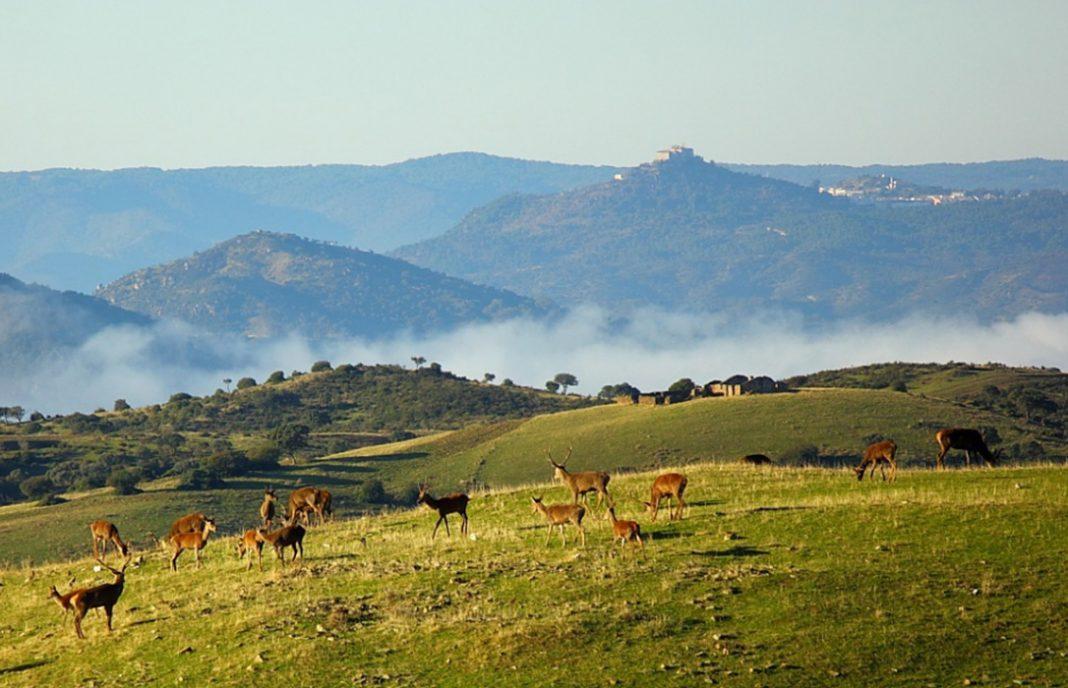 Rechazo agrícola a la posible declaración de Sierra Morena de Córdoba como Parque Natural