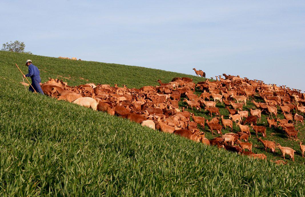 El PP andaluz critica y pide medidas a la industria que no garantiza un precio justo para la leche de cabra