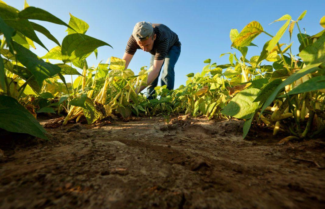 Big Data en el sector agroalimentario: «decidir y actuar con precisión a partir de muchos más datos»