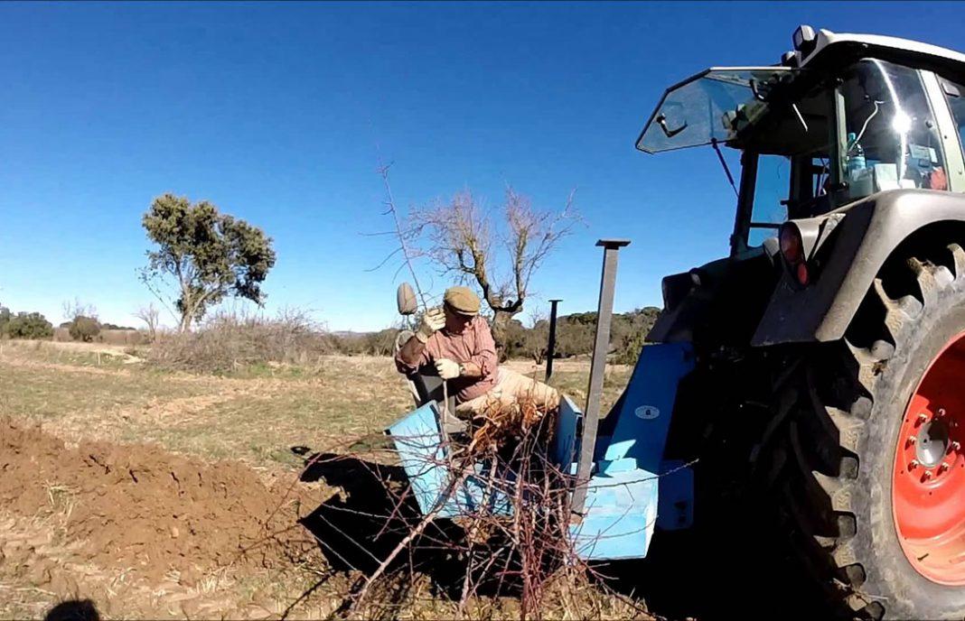La almendra sigue siendo atractiva: Más de 400 agricultores se interesan por el cultivo del almendro como alternativa