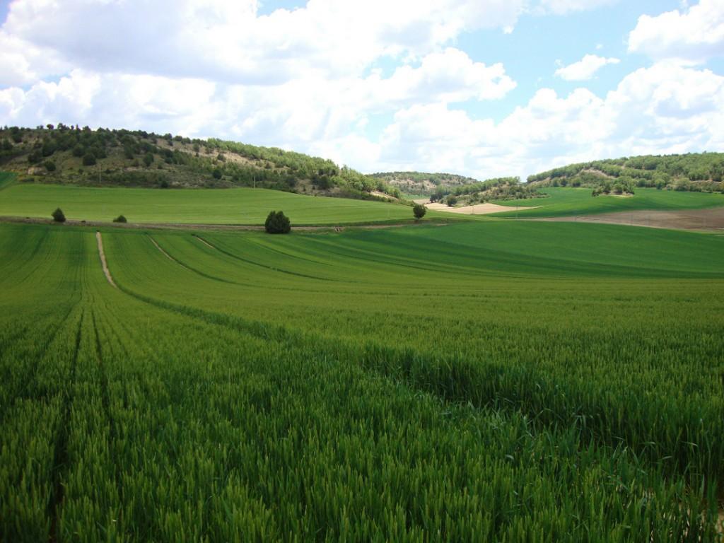 """PAC: Tildan de """"maquiavélica"""" la comunicación de la CE sobre el futuro de la agricultura y la alimentación post 2020"""