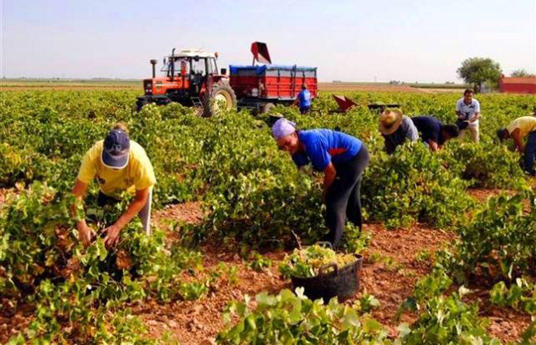 Más valoraciones sobre la futura PAC: falta enfoque hacia agricultores profesionales y agricultura ecológica