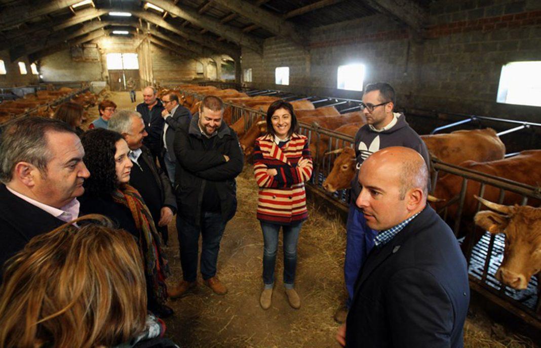 La Xunta inicia con el vacuno de leche y la vaca nodriza el pago de la PAC, que finalizará antes de que acabe el mes