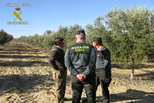 La Guardia Civil recupera 4.000 kg de aceitunas, inmoviliza otros 30.000 de forma cautelar y detiene a ocho personas