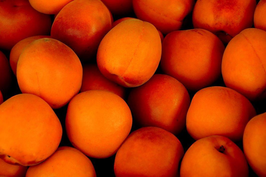 Proponen plan de arranques en melocotones y nectarinas para evitar más pérdidas el sector de fruta de hueso