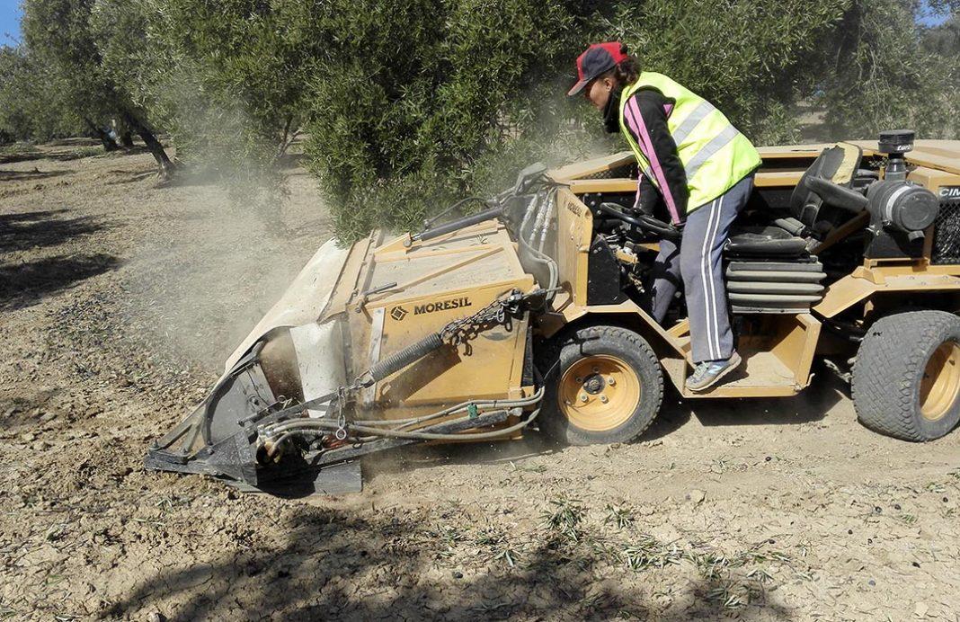 Andalucía aprueba ayudas por valor de 62,6 millones de euros para más de mil jóvenes que se incorporan al campo