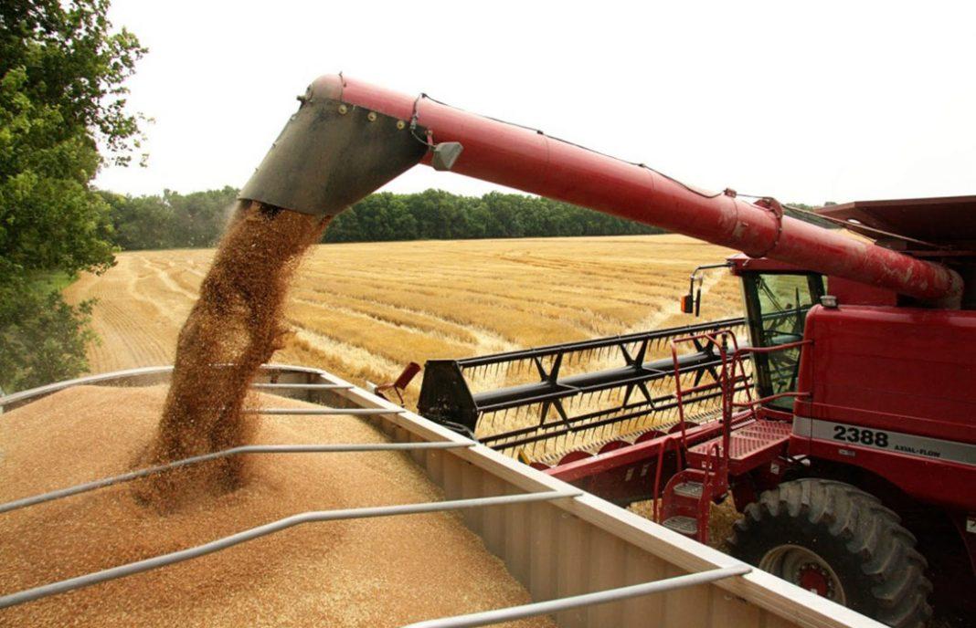 Descenso de los precios de los cereales salvo el trigo duro en los mercados mayoristas