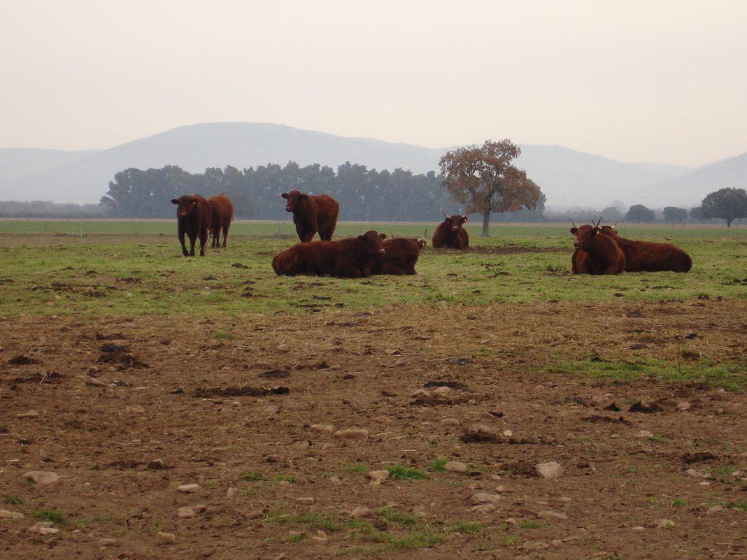 UE-Mercosur: alertan del brutal impacto y acusan de entregar la ganadería a cambio de coches y facilidades en licitaciones