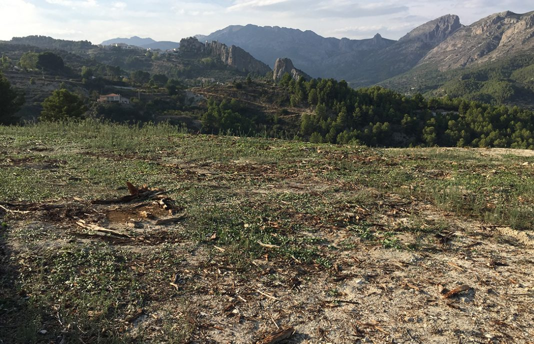 Los arranques no funcionan: Detectado el quinto brote de xylella en almendros de Alicante