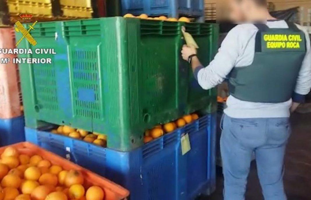 Duro golpe a los robos: 23 detenidos y 22 imputados por falsificar el origen de 424 toneladas de naranjas