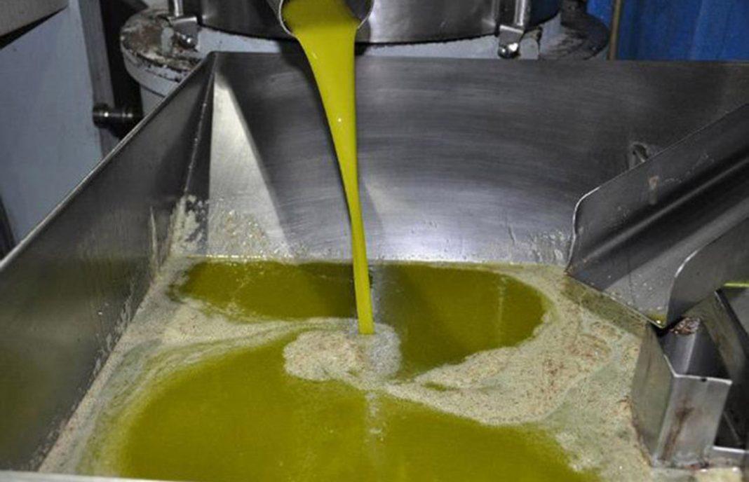 La campaña del aceite de oliva arranca con menos ventas y con una caída de los precios en origen