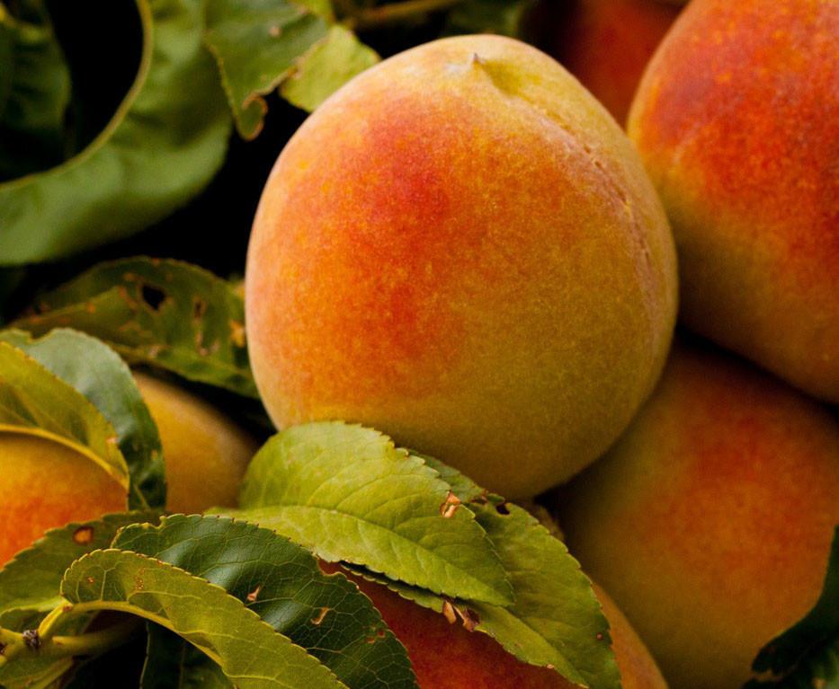 Fruta dulce: los productores piden mejoras fiscales para poder afrontar la próxima campaña