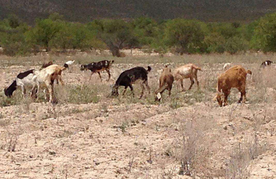 Propuesta al Senado para afrontar la sequía: 1.000 millones de presupuesto y medidas reales