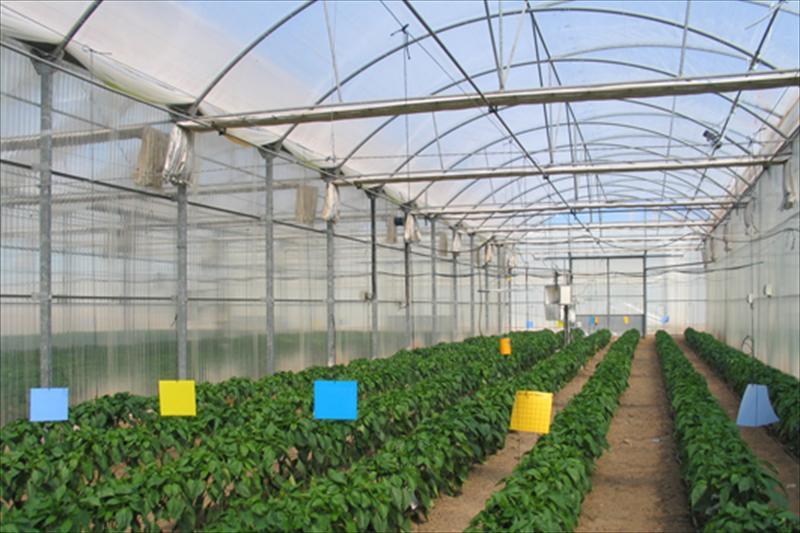 La Junta desarrolla un modelo de predicción de la cosecha hortícola bajo invernadero a partir de BIG DATA