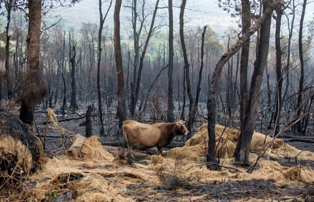 Denuncian que se prohiba declarar la superficie quemada en la solicitud de la PAC cuando ya se puede pastar