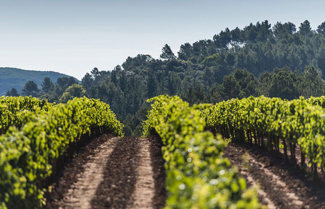 Agricultura, turismo y hostelería
